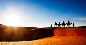 Morocco-yoga-retreat (camels)